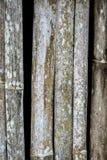 Grunge bambusa ściana z zielonobiałą foremką Obrazy Stock