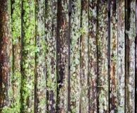Grunge bambusa ściana z zielonobiałą foremką Zdjęcia Royalty Free