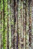 Grunge bambusa ściana z zielonobiałą foremką Zdjęcie Stock