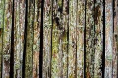 Grunge bambusa ściana z zielonobiałą foremką Zdjęcia Stock