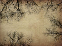 Grunge bare trees Stock Photo