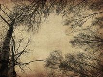 Grunge bare trees Royalty Free Stock Photo