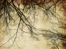 Grunge bare trees silhouettes Stock Image