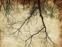 Grunge bare trees silhouettes Stock Photography