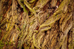 Grunge bark texture Stock Images