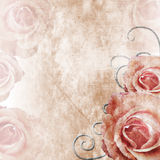 Grunge Beautiful Roses Background ( 1 of set) Royalty Free Stock Photos