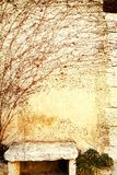 Grunge bench. Grunge wall with dry vine and orange leaves and a stone bench Royalty Free Stock Images