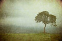 Grunge bild av en tree på ett tappningpapper fotografering för bildbyråer
