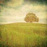 Grunge Bild eines Baums über grunge Hintergrund Lizenzfreies Stockfoto