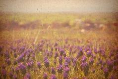 Grunge Bild eines Feldes Stockfotografie