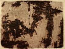 Grunge birch bark Stock Photography