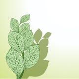 Grunge Blätter Lizenzfreies Stockfoto
