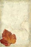 Grunge Blatt Stockbild