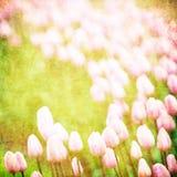 Grunge blom- bakgrund med avstånd för text stock illustrationer