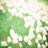 Grunge blom- bakgrund med avstånd för text royaltyfri illustrationer
