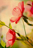 Grunge Blume Lizenzfreies Stockbild