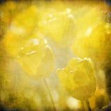Grunge Blumenhintergrund mit Platz für Text lizenzfreie abbildung