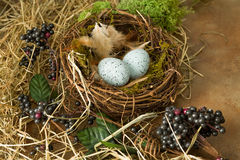 Grunge border with nest and eggs Stock Image