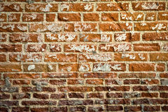 Grunge Brick Wall Royalty Free Stock Photos