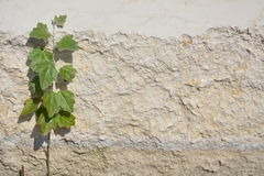Grunge brick wall with isolated plant Stock Photo