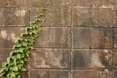Grunge brick wall ruin background. Grunge brick wall ruin outdoor background Stock Photos