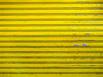 Free Grunge Bright Yellow Roller Shutter Door Texture Background Royalty Free Stock Images - 47418239