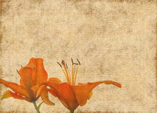 Grunge brown paper with orange lily flowers Stock Photography