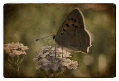 Grunge butterfly. A little butterfly on a flower in a meadow royalty free stock photos