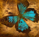 Grunge butterfly. Old grunge butterfly wooden texture background stock images