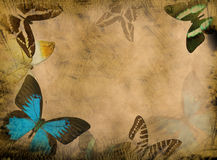 Grunge butterfly background. Old grunge butterfly paper texture background stock image