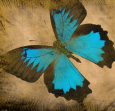 Grunge butterfly background. Old grunge butterfly paper texture background royalty free stock image