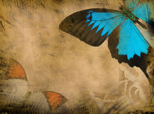 Grunge butterfly background. Old grunge butterfly paper texture background royalty free stock photography