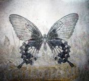 Grunge butterfly background. Golden flower pot royalty free stock photography