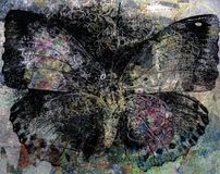 Grunge butterfly background texture. Background royalty free stock photography