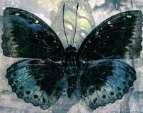 Grunge Butterfly background texture. Image stock photo