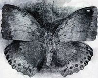 Grunge butterfly background texture. Monochrome stock photography