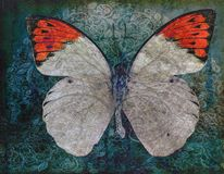 Grunge butterfly background texture. Toned stock photos