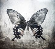 A grunge butterfly design wallpaper. Texture royalty free stock image