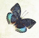 A grunge butterfly design wallpaper. Texture royalty free stock images