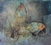 A grunge butterfly design wallpaper. Texture stock images