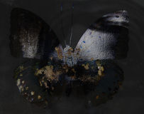 Grunge butterfly Stock Photo