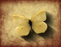 Grunge Butterfly with Shadow Stock Images