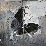 A grunge butterfly wallpaper texture. Image stock photos