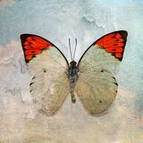 A grunge butterfly wallpaper texture. Image royalty free stock images