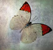 A grunge butterfly wallpaper texture. Layers royalty free stock image