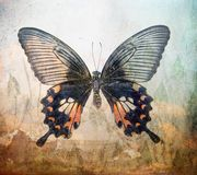 A grunge butterfly wallpaper texture. Layers royalty free stock photo