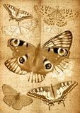 Grunge canvas back with butterflies Royalty Free Stock Photo