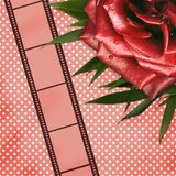 Grunge card with film and red rose Stock Image