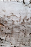 Grunge Cement Scratched Wall Royalty Free Stock Images