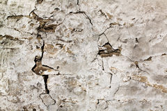 Grunge cement wall Royalty Free Stock Photos